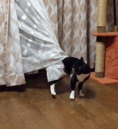 Любопытство взяло кота снова застрял.