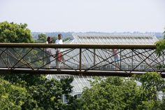 Image 10 of 15 from gallery of Kew Tree Top Walkway & Rhizotron / Marks Barfield Architects. Photograph by Peter Durant Kew Gardens, Botanical Gardens, Sweet Chestnut, Weathering Steel, Tree Canopy, Site Plans, Tree Roots, Garden Trees, Birds Eye View