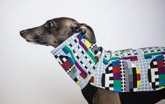 Italian Greyhound clothing #italiangreyhound #italiangreyhoundclothing #charcikwłoski #dogwear #dogclothes #nosignal