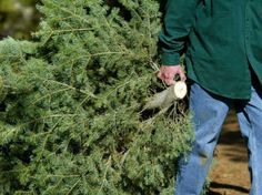 Important tips for Christmas tree safety!
