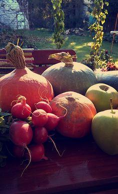 #autumn #fall #vegetable #vegetarian #sunny #pumpkin