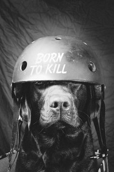 Make sure to wear a helmet when longboarding. Your best friend and dog will thank you.