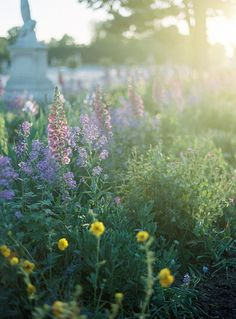 Garden Visit: The Tuileries at Sunset, with Alice Gao: Gardenista