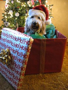 Sooo adorable. Don't forget to order your grain free organic dog treats for his stocking!  Www.boneyardbakery.net