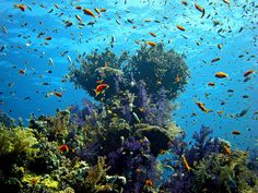 The Red Sea - beautiful places to visit in Egypt