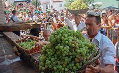 La localidad de la Alta Axarquía celebra este martes la 42.º edición de su fiesta en honor a la uva moscatel.      Fiel a su cita con la tradición, Cómpeta celebra este martes 15 de agosto, festividad de la Asunción, la 42.º edición de la Noche del Vino, en la que se reparten cerca de 2.500 litros del exquisito jugo de la uva moscatel de Alejandría. Unas 9.   #competa #noticias #vino moscatel