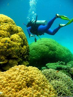 5 Stunning Coral Reefs of the World (Great Barrier Reef, Australia pictured here)