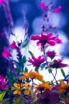 ~~Color splash! ~ wildflowers bokeh by LKungJr~~