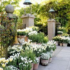 Florist Shop Technique in Your Garden