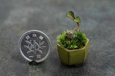 Miniaturowe bonsai 4