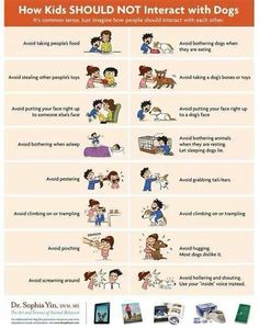 How Kids SHOULD NOT Interact With Dogs - Lola The Pitty 'My Dog Bit My Child' - poster via Dr. Teaching kids to treat animals w/ respect: Dogs And Kids, Animals For Kids, Crazy Animals, Pet Dogs, Dogs And Puppies, Doggies, Dogs 101, Puppies Tips, Rescue Dogs
