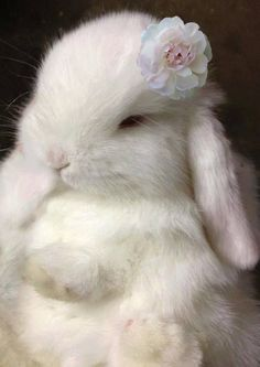 Is is a fluffy bunny or is it a princess? Cute baby animals, baby bunnies