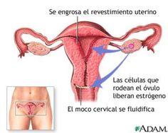 Primera semana de embarazo
