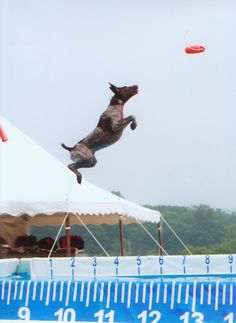 GSP at Dock Dog...he got some serious air!