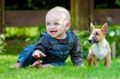 Babies and Dogs: 10 Best Breeds for Newborns...credit: Yahoo!Shine