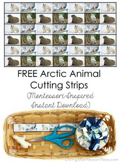 Montessori Preschool: Zoology and practical life - cutting photos of arctic animals out of strips Montessori Practical Life, Montessori Preschool, Preschool Lessons, Preschool Activities, Montessori Elementary, Children Activities, Motor Activities, Winter Activities, Artic Animals