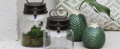 Dol op groen Water Bottle, Jar, Home Decor, Seeds, Decoration Home, Room Decor, Water Flask, Water Bottles, Interior Design
