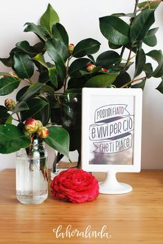 Frasi motivazionali di Mr. Wonderful in giro per casa. Ne parliamo sul blog http://lahoralinda.com/blog/un-mantra-per-vivere-meglio/