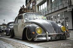 VW beetle rat