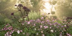 Garten Moorriem - Bilder - Besuchergarten und Gärtnerei bei Oldenburg