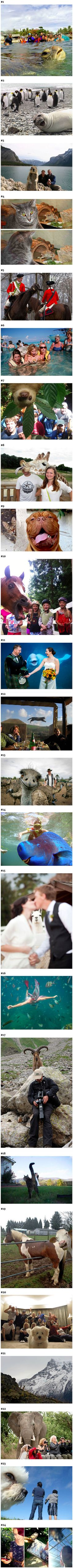 These strange animals are experts at photobombing.