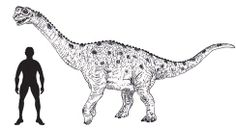 Europasaurus, new study suggests two dwarf types of Europasaurus. Bullyland may have to make another model.