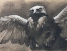 Dawn - A majestic and mythical griffin / gryphon - 8.5 x 11 art print of a charcoal drawing