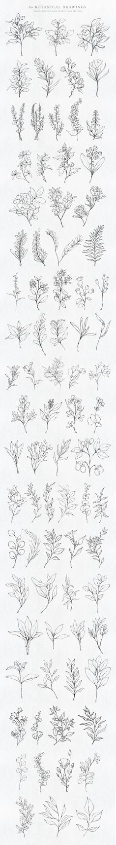 80 Botanical Hand Drawn Illustration by Zeppelin Graphics on Floral Illustrations, Pencil Illustration, Graphic Illustration, Hand Drawn Flowers, Bullet Journal Ideas Pages, Botanical Flowers, Drawing Tips, Flower Tattoos, Arm Tattoo