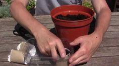 Geniale: usa il Rotoli di Cartone della Carta Igienica per un trucchetto di Giardinaggio