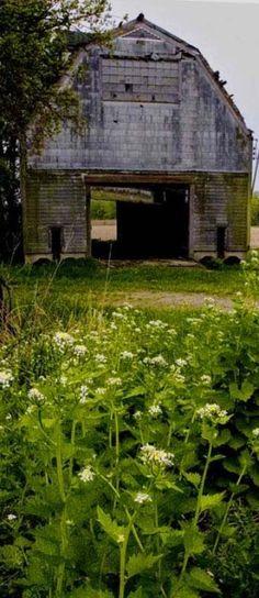old barn // Swede Cottage Farm // Country Barns, Country Life, Country Living, Country Roads, Country Charm, Farm Barn, Old Farm, Old Buildings, Abandoned Buildings