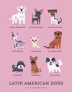 El origen de 200 razas de perros en divertidas ilustraciones, ¿encontraste al tuyo?