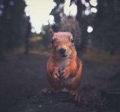 Young Photographer Captures Dreamy Snapshots Of Wild Woodland Animals
