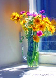 A summer morning flower show.