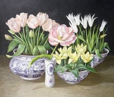 Tulipa (Galley)