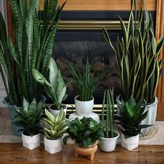 House Plant Journal — Finally had time to do this: all my snake plants...
