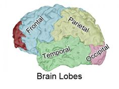 TJ's Biomedical Imaging does brains. We do medical illustration, medical animations, trial exhibits, trial graphics on people with traumatic brain injury. http://tjsbm.com/