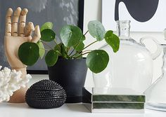 Love this plant! But difficult to find. Beautiful Interior Design, Nordic Design, My Living Room, Potted Plants, Plant Pots, Go Green, Love Flowers, Horticulture, Feng Shui