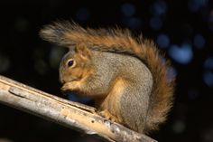 Avec quelques noix par jour, la vie n'est que meilleure !
