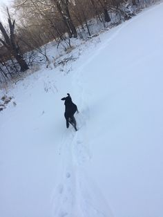 Bear, the dog, tracing my snowshoe tracks on the lake...