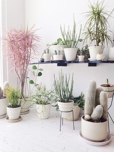 Plants purify air for us. Decorating living room with Indoor plants makes us feel more comfortable and relaxed. Indoor plants are those that can live with minimal or no sunlight. Here are some of the ways to decorate indoor plant in living rooms. Indoor Garden, Indoor Plants, Home And Garden, Dream Garden, Potted Plants, Inside Garden, Plant Pots, Decoration Plante, Interior And Exterior