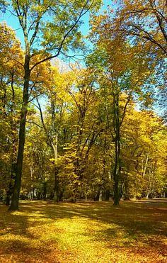 Fall, Gliwice, Poland