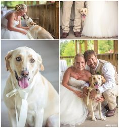 Our pets should be apart of our special day too, they're family after all! #yellowlab