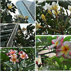 2017년 3월 29일 수요일, 마닐라날씨, 오전7시27℃ 대체로흐림, 오후1시33℃ 대체로화창, 오후7시29℃ 간헐적흐림,  「 McK 」GOLF of Phil ™ Wednesday, March 29, 2017. Weather in Manila.