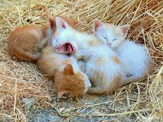 Cuteness Overload!!❤❤