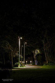 Waikato University, Hamilton, New Zealand Path Under Light