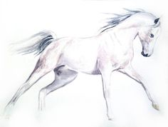 Watercolor painting Riding white horse animal by AndreaPaintings