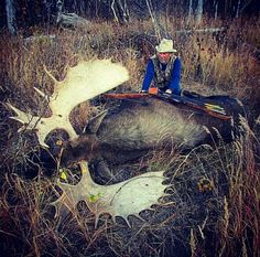 Alaskan moose taken down by tradbow