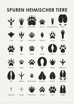 """Animal tracks, infographic from the """"Lily Lux Notebook"""", illustration © 2011 Iris L .- Animal tracks, infographic from the """"Lily Lux Notebook"""", illustration © 2011 Iris Luckhaus Iris, Animal Tracks, House Illustration, Illustrations Poster, Family Illustration, Information Graphics, Survival Skills, Bushcraft Skills, Animals And Pets"""