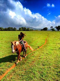 The road less traveled, princeville Kauai