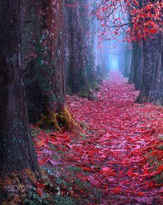 """"""" Fairytale Pathway """" by SejmenovicMevludin"""